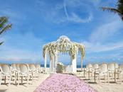 沙滩婚礼筹谋