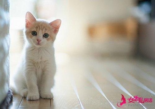 猫咪耳螨的防治方法_猫咪耳螨的危害_猫咪耳螨治疗