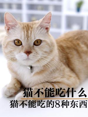 猫不能吃什么?猫不能吃的东西介