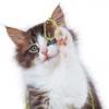 怎么自制猫粮 2款自制猫粮的做法