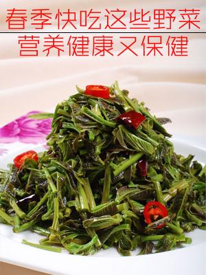 春季快吃这些野菜 营养健康又保