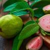 夏季吃什么水果减肥?3种水果超