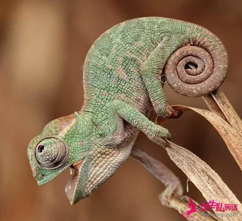蜥蜴怎么养   三联
