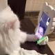 范冰冰晒爱猫与李晨视频照 甜蜜告白:想你们