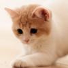 猫为什么会摇尾巴 猫摇尾巴代表