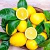柠檬怎么吃?柠檬在烹饪中的作用