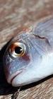 鱼身上的5个营养部位 你当垃圾丢掉了吗