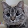 知识:多久给猫一次澡比较好?