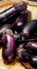 降血压抗肿瘤 茄子的营养与功效介绍