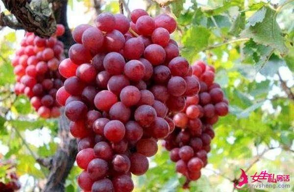 """世界上""""最贵""""的水果,榴莲落榜,这4种水果,让你吃到刷新三观"""