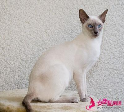 网上最红的6种宠物猫,网友:好想撸猫!