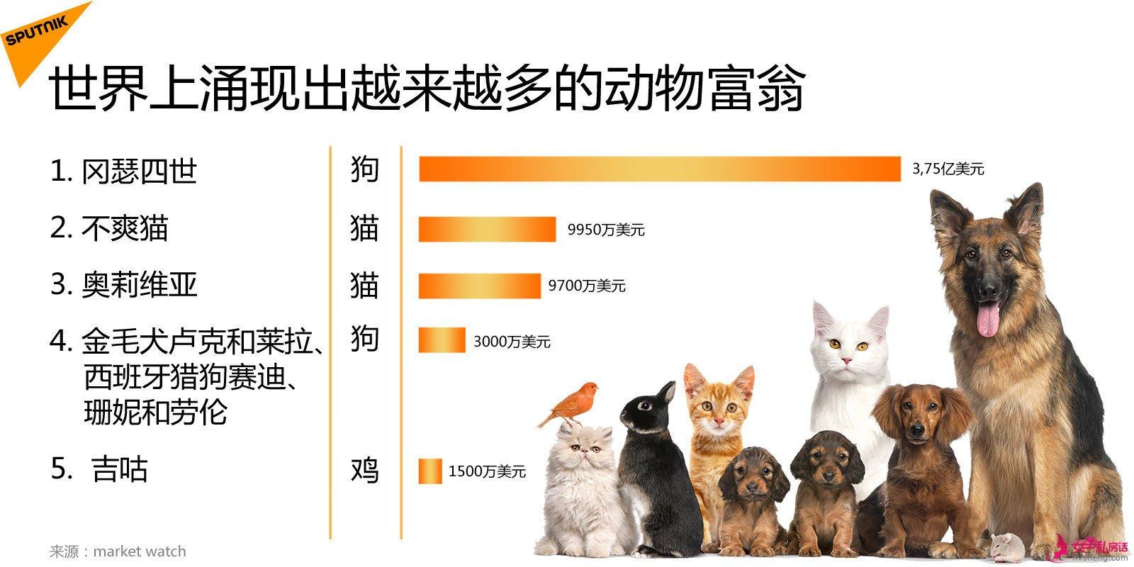 动物都比你有钱!全球动物富翁越来越多,不仅仅是老佛爷的宠物猫