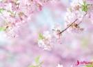 3月底,阳光明媚,花香四溢,真爱降临,3星座相依相偎,柔情似水