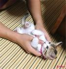 小猫咪和主人对视半天,小猫咪突