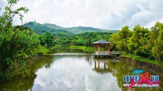 兴隆咖啡谷美景 万宁市委宣传部供图 摄