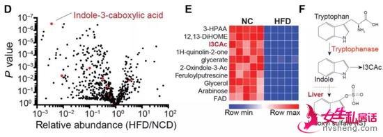 ▲在高脂饮食的条件下,I3CA是表达量显著减少的肠道细菌代谢产物,它和吲哚都是色氨酸代谢衍生物(图片来源:参考资料[1])