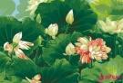 周晓枫《夏至》:我想象伊甸园只有一个季节,永久的盛夏